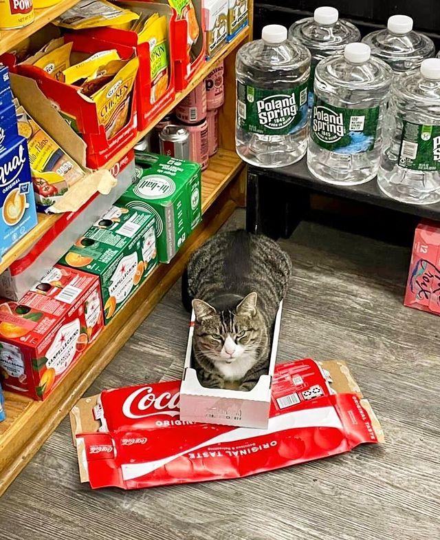 gato dentro de una caja ;17 Pruebas de que los gatos siempre hacen lo que quieren