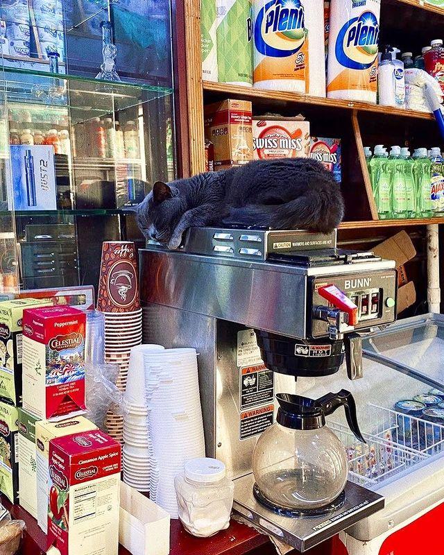 gato sobre cafetera ;17 Pruebas de que los gatos siempre hacen lo que quieren