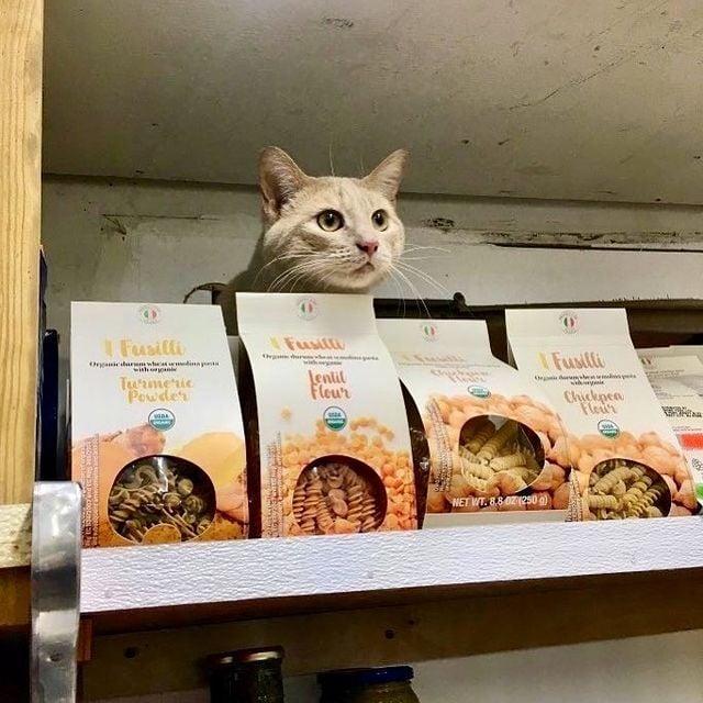 gato tras cajas de galletas ;17 Pruebas de que los gatos siempre hacen lo que quieren