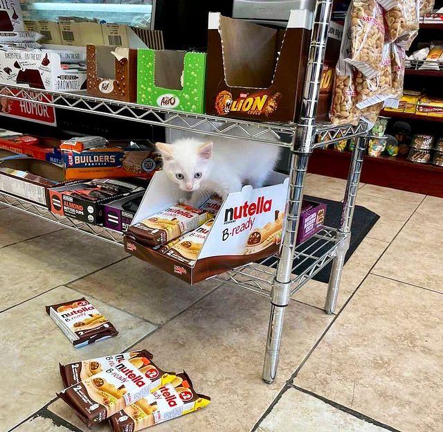gato en un almacén ;17 Pruebas de que los gatos siempre hacen lo que quieren