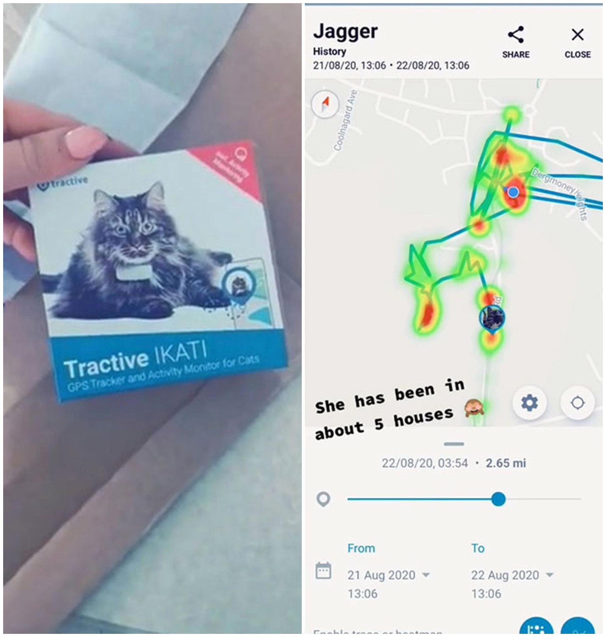 Mapa de GPS; Le pone GPS a su gatita y se da cuenta que visita 5 familias diferentes al día