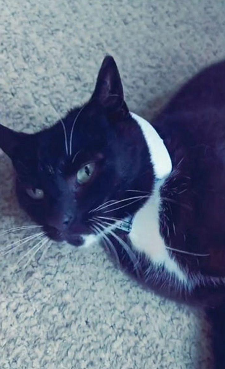 Gatita recostada; Le pone GPS a su gatita y se da cuenta que visita 5 familias diferentes al día