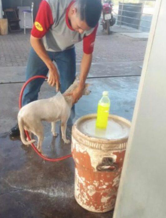 Hombre bañando a un perrito en una gasolinera