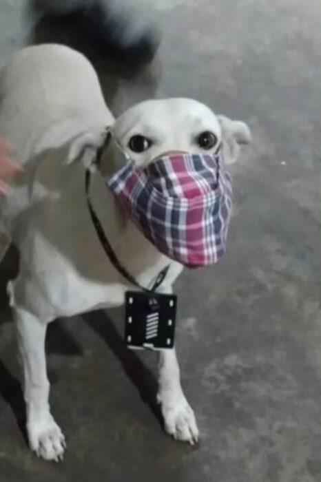 Perrito abandonado protegido con un cubrebocas
