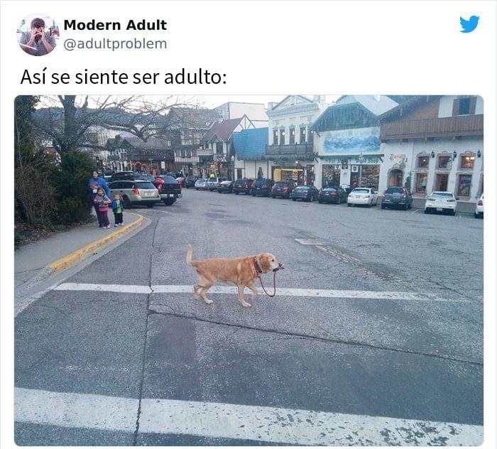 perro cruzando la calle ;15 Memes sobre la vida adulta con los que sí te identificarás