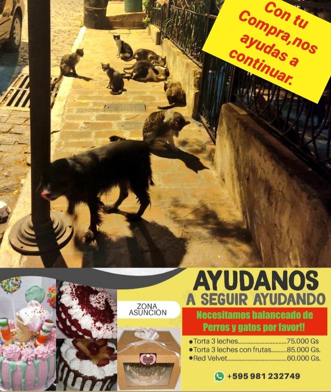 Cartel de ayuda para ventas; Mujer vende pasteles caseros para alimentar a 50 animales callejeros