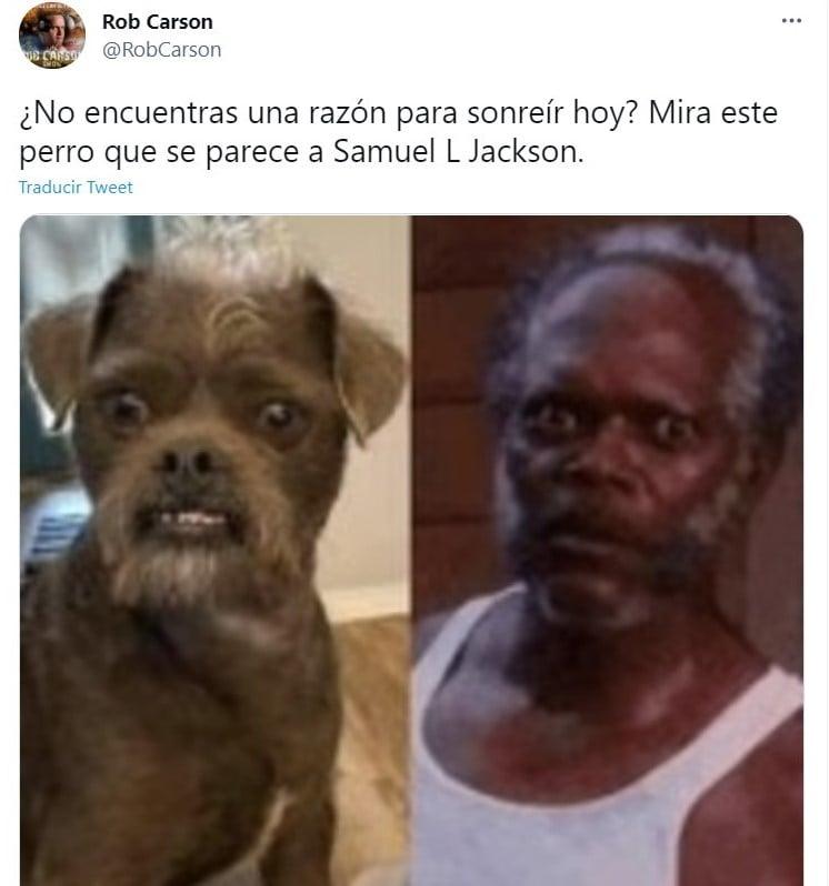 Tuit Comparten fotos de su perro rescatado e internet lo compara con Samuel L. Jackson