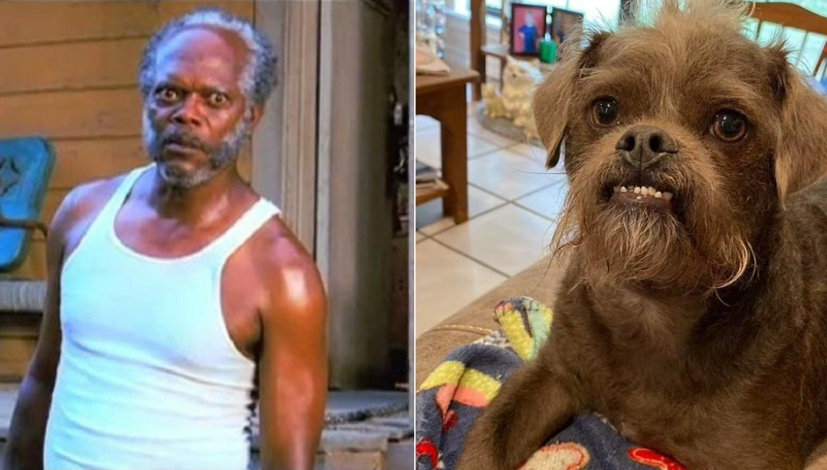 Comparación perro con el actor Samuel L. Jackson; Comparten fotos de su perro rescatado e internet lo compara con Samuel L. Jackson