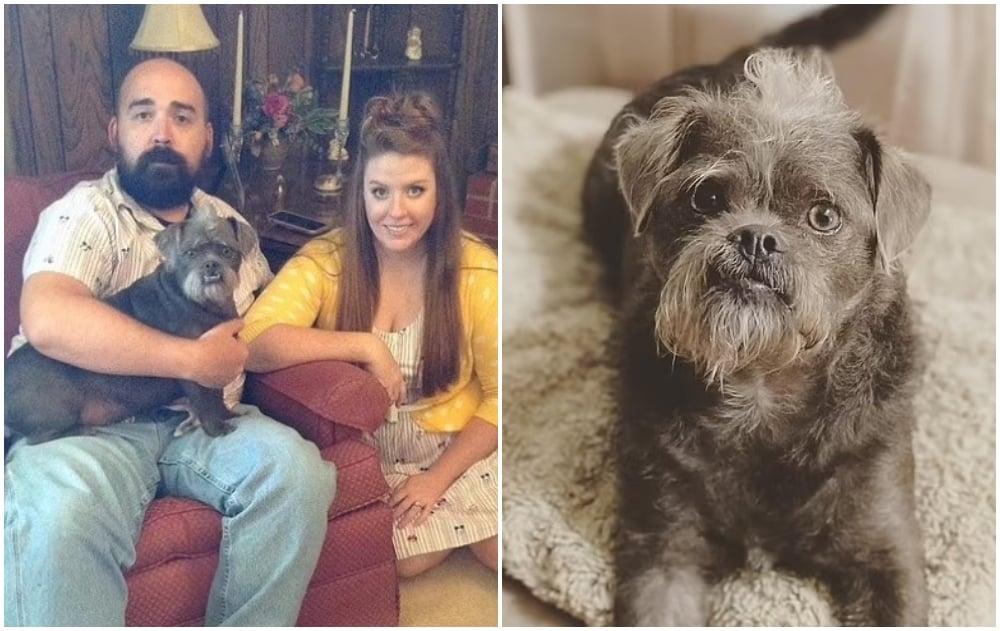 Comparten fotos de su perro rescatado e internet lo compara con Samuel L. Jackson