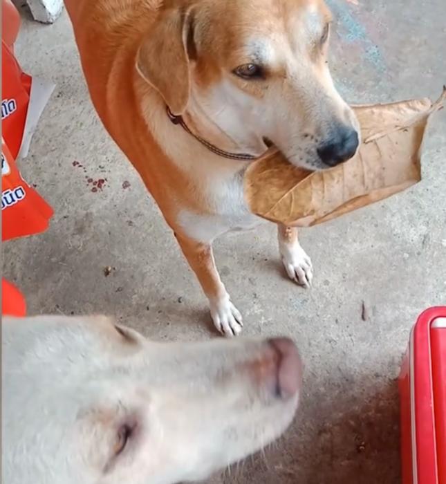 Perrito pagando con una hoja en un restaurante