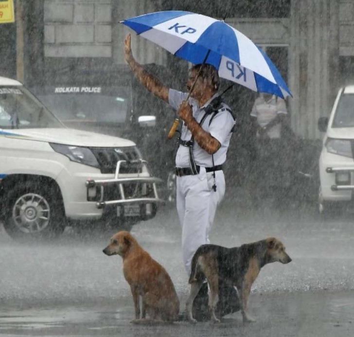 Perros junto a un policía; Perritos sin hogar buscan refugio de la lluvia bajo el paraguas de un policía