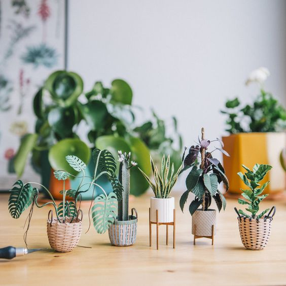 Suculentas chiquitas para decorar un espacio