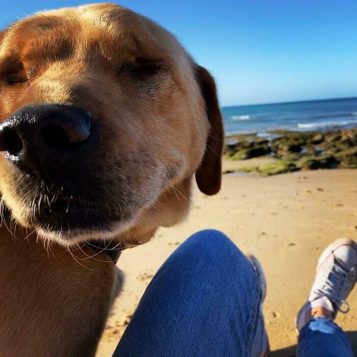 perro en el desierto ;19 Mascotas rescatadas que te alegrarán el día