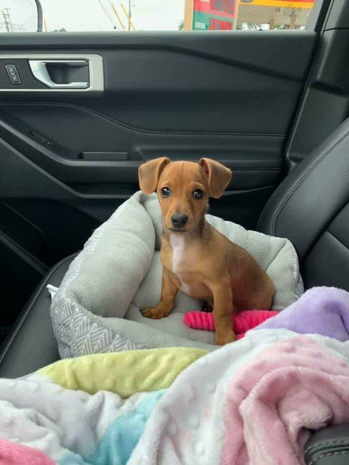 perro dentro de un carro ;19 Mascotas rescatadas que te alegrarán el día