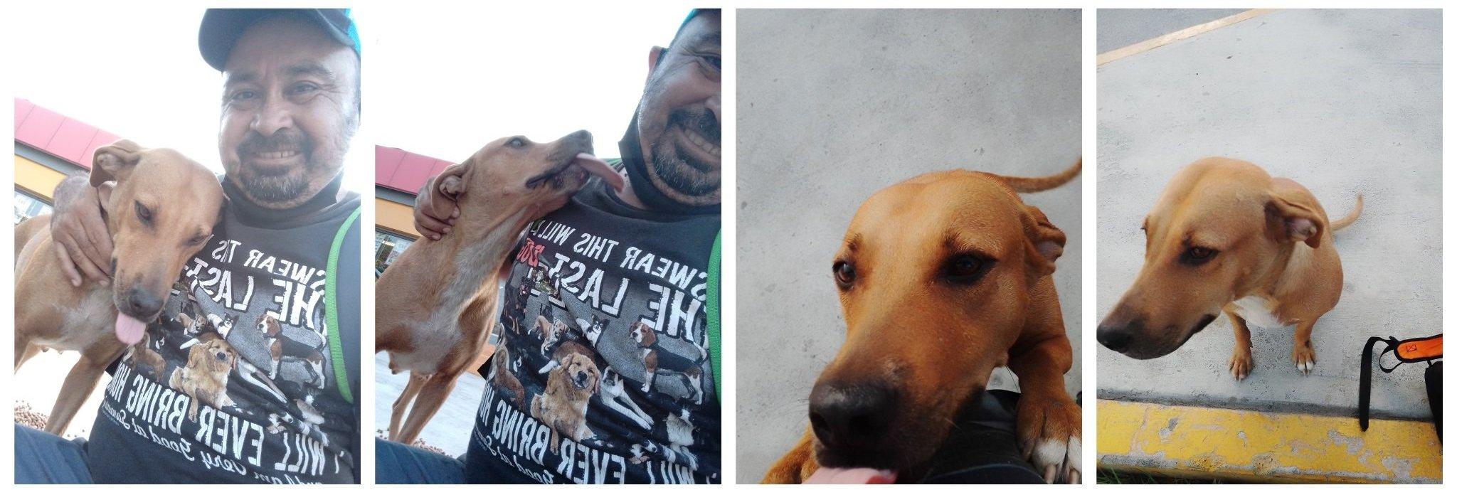 Hombre cargando a una perrita; Perrita callejera le muerde un brazo y ahora le lleva comida todos los días