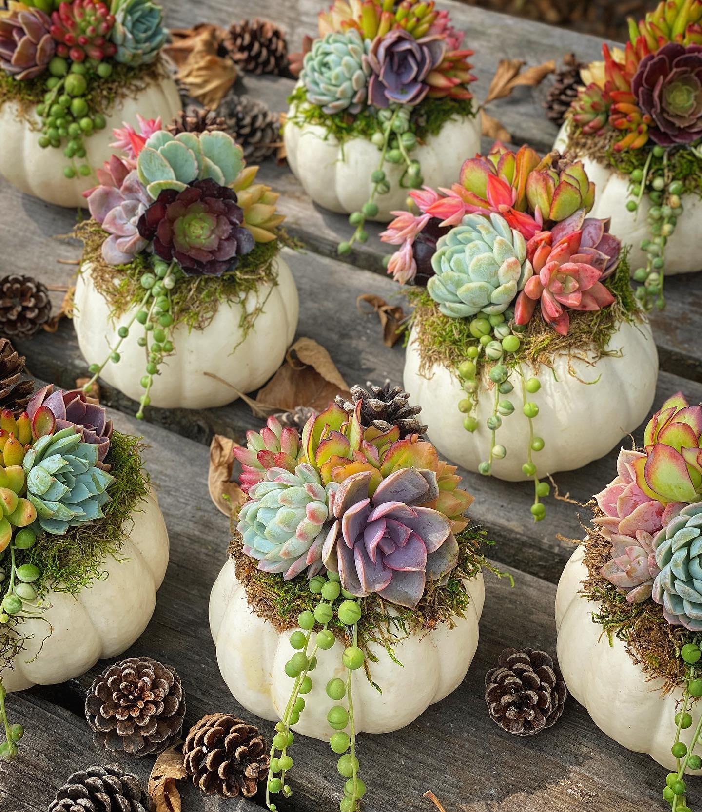 decoración con calabazas; 13 Ideas para que tus suculentas crezcan dentro de una calabaza 'mágica'